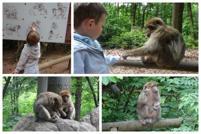 montagne des singes mai 20153