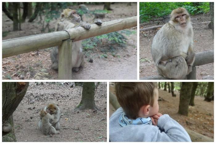 montagne des singes mai 20152